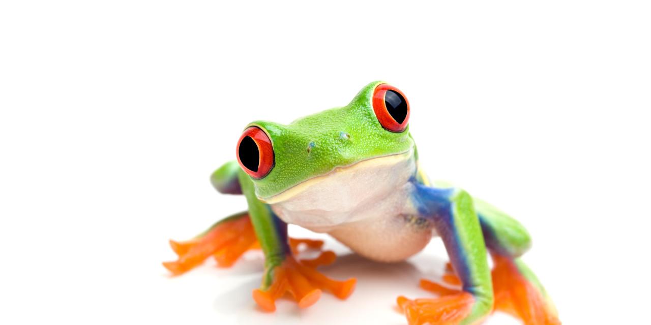The Biology Professor and the Frog *Joke