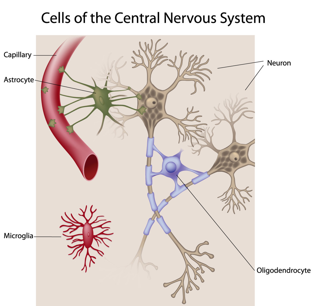 two main types of cells in nervous system biology essay Assignment 3 written essay questions 1 a) we are able to experience different types of sensations because our nervous system encodes messages german physiologist johannes muller in his doctrine of specific nerve energies described a kind of code which is anatomical.