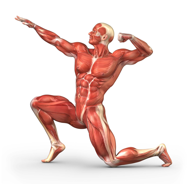 筋肉の種類