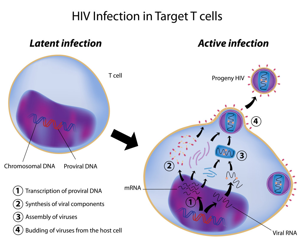 an overview of the immunology of aids