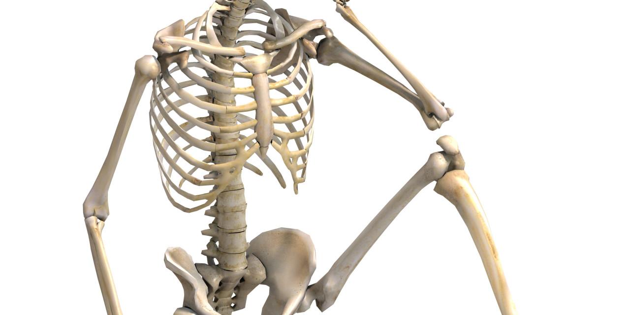 Image result for bones
