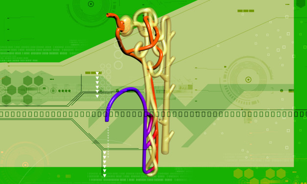 Nephron: The Functioning Unit of The Kidney