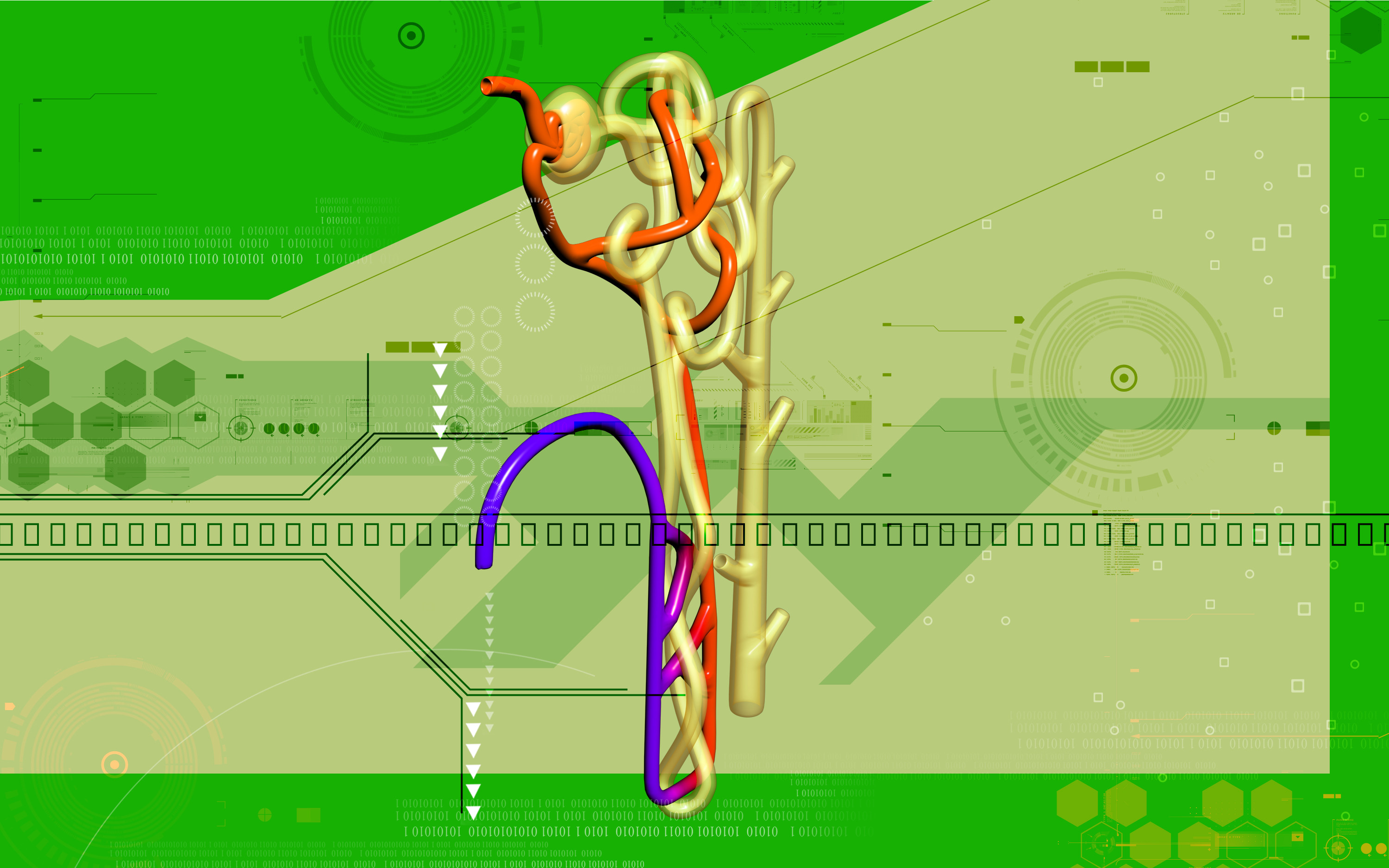 Nephron  The Functioning Unit of The Kidney  Interactive Biology  with Leslie Samuel