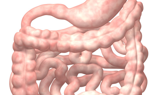 What Happens When We Eat? Gastric Motility