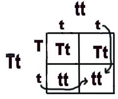 An Example Of The Two Trait Punnett Square Is Also Given Below A Called As P