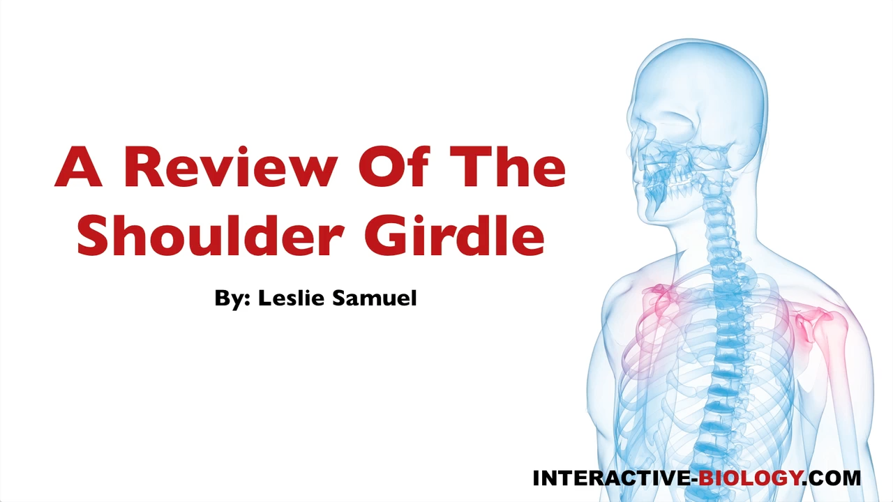 080 A Review Of The Shoulder Girdle Interactive Biology With