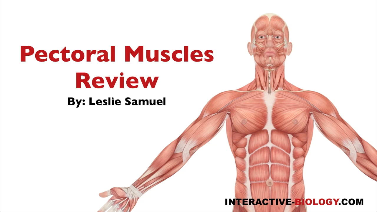 086 pectoral muscles review - interactive biology, with leslie samuel, Muscles