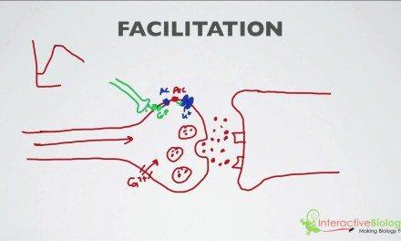 020 Facilitation