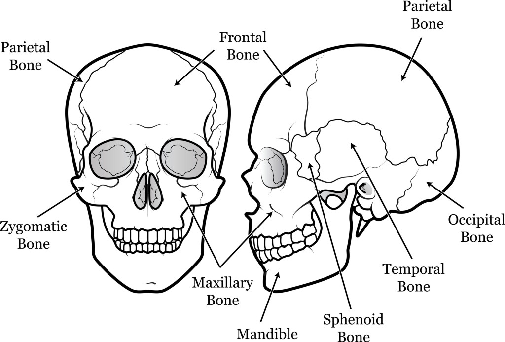 bone development - some concise notes for review