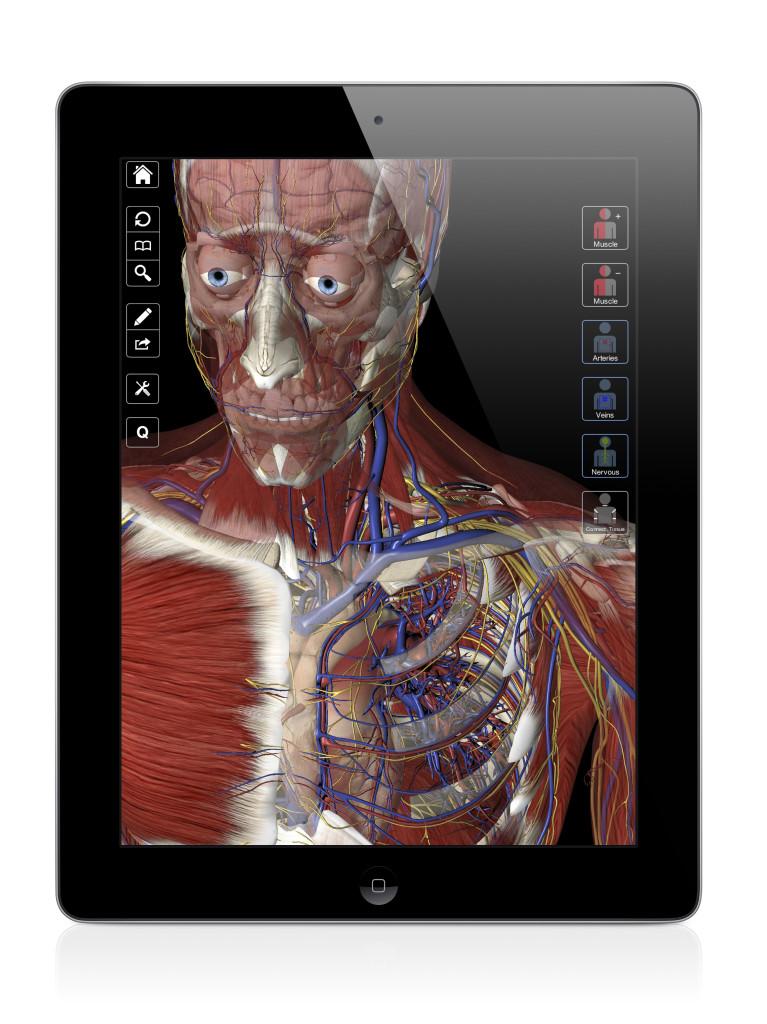 Anatomy interactive games